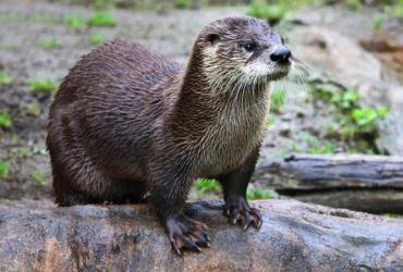 Expo: Olga de otter reist door Vlaanderen