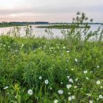 Nieuwe natuur aan de Maas: Excursie met MaasVerkenner