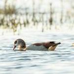 Cultuur en nieuwe natuur aan de Maas: Excursie met MaasVerkenner