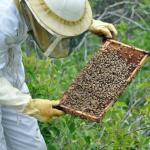 Lekker Lokaal: Workshop Maasmechelse honing