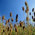 Bloemen- en kruidenwandeling Molenplas