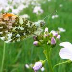 Dwaal door de wilde bloemenzee aan de Maas