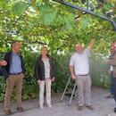 Lekker Lokaal: Rondleiding Wijngaard Steenakker met degustatie