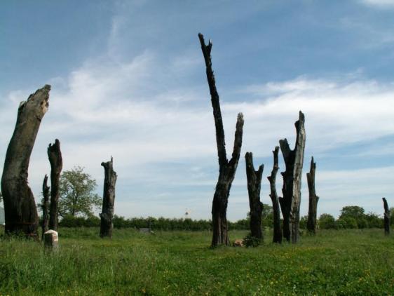 AFbeelding bomenmonument Meers